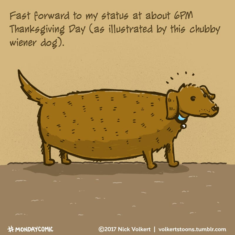 A wiener dog is uncomfortable after eating too much food.