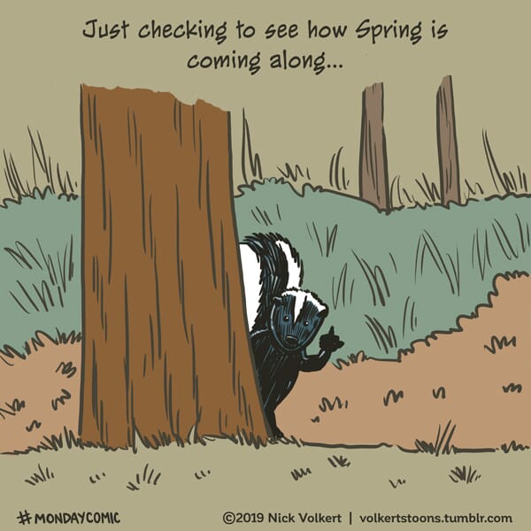 A skunk gives the viewer the finger.