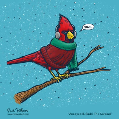 An annoyed male cardinal wearing ear muff, a sweater and a scarf, while perched on a branch surrounded by snow