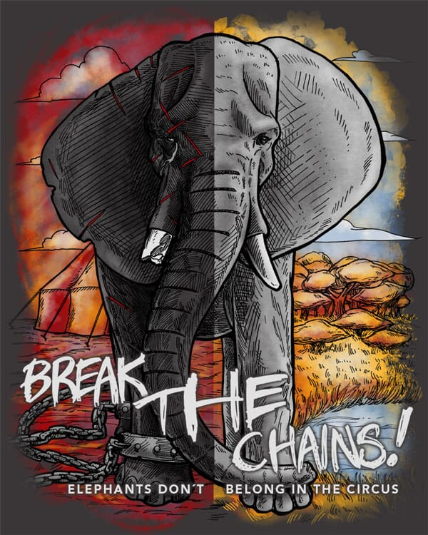 A split view of an elephant enslaved at a circus environment in chains, against a view of a healthy elephant in the wild in Africa.